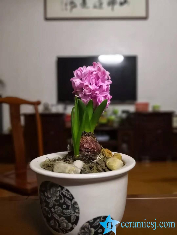 Household ceramic flowerpot